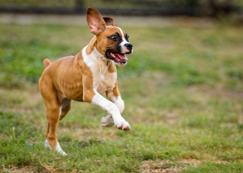 aree ludiche per cani
