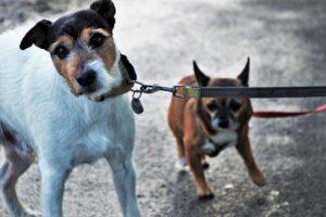 Animali, LAV Roma: Regolamento Tutela animali non discusso con associazioni