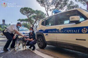 Vagava spaventata sul lungotevere, cagnolina salvata dalla Polizia di Roma Capitale